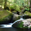 Stock Photo: Rainforest River