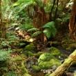 Rainforest Respite - Stock Photo