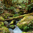 Stock Photo: Rainforest Magic