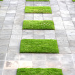 Geometric Paving and Lawn — Stock Photo