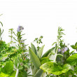 Herb Border — Stock Photo