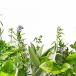 Herb Border — Stock Photo #5526334