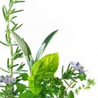 Herb Border — Stock Photo #5526336