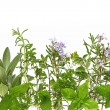 Herb Border - Stock Photo