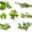 Royalty-Free Stock Photo: Herb Collection
