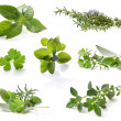 Herb Collection - Stock Photo