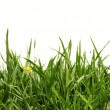 Grass — Stock Photo #5527975