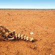 Bones in the Desert — Stock Photo