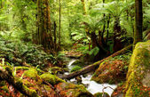 Ancient Rainforest — Stock Photo