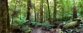Rainforest Panorama — Stock Photo