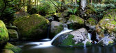 Rainforest River Panorama — Stock Photo