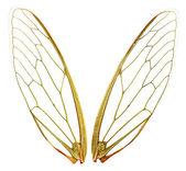 Wings (wth Path) — Stock Photo