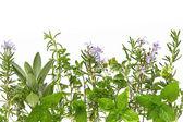Herb Border — Stock Photo