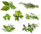 Herb Collection — Stock Photo
