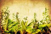 Grunge Herbs — Stock Photo
