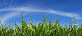 Grass and Sky Panorama — Stock Photo