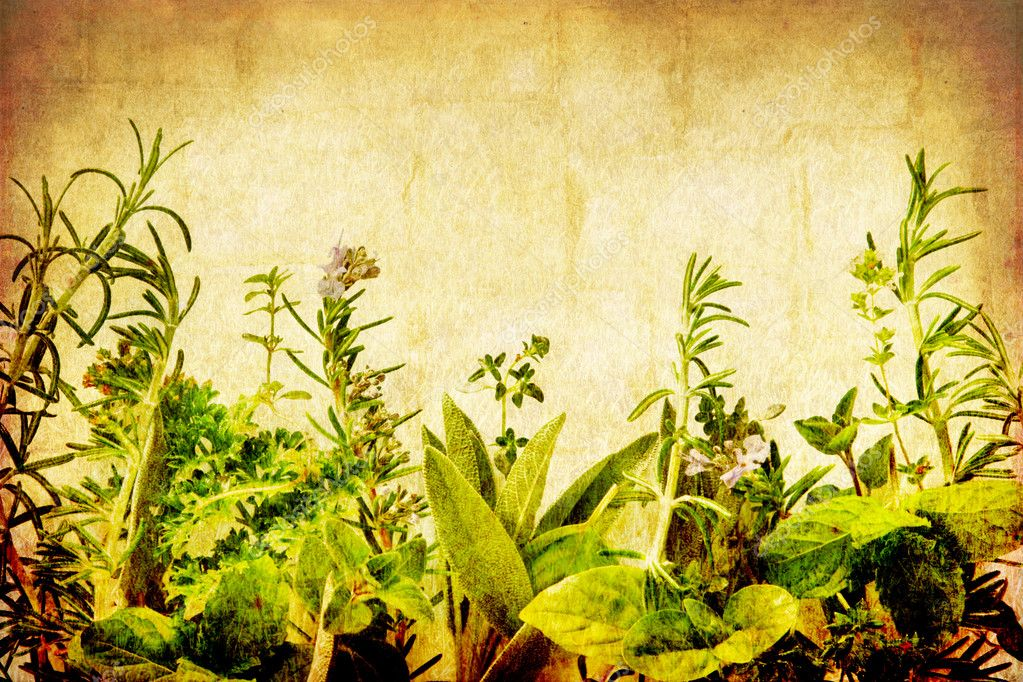 Herbs on a grunge background, with copy-space.  Photo-based illustration combining sandstone and wheat textures with a border of fresh herbs. — Stock Photo #5527241