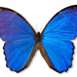 Blue Butterfly (with Path) - Stock Photo