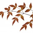 Russet Leaves — Stock Photo