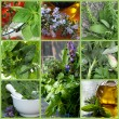 Herbs Collage — Stock Photo