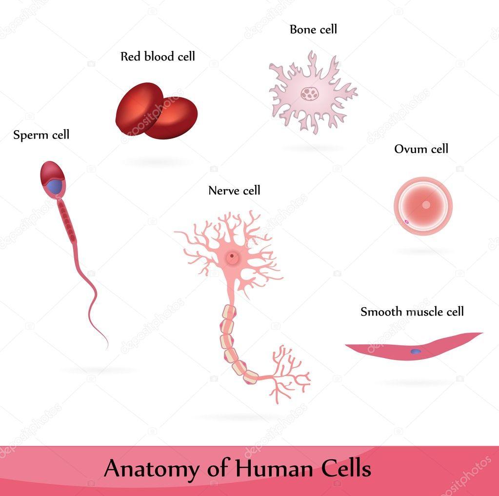 prichini-poyavleniya-krovi-v-sperme