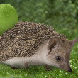 Hedgehog and apple on the grass — Stock Photo