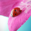 Red ladybird on flower petal — Stock Photo #5645426