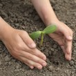Green sprout in child hand — Stock Photo #5646370