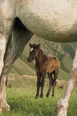 在山上放牧的马 — 图库照片