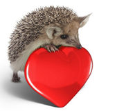 Hedgehog on red heart — Foto Stock
