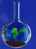Green sprout in glass retort — Stock Photo