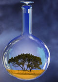 Tree in glass retort — Stock Photo