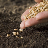 Sowing seed — Stock Photo