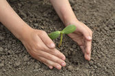 Green sprout in child hand — Stock Photo