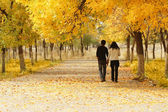 Young couple walking together in Autumn — Stockfoto