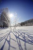 Paysage d'hiver — Photo
