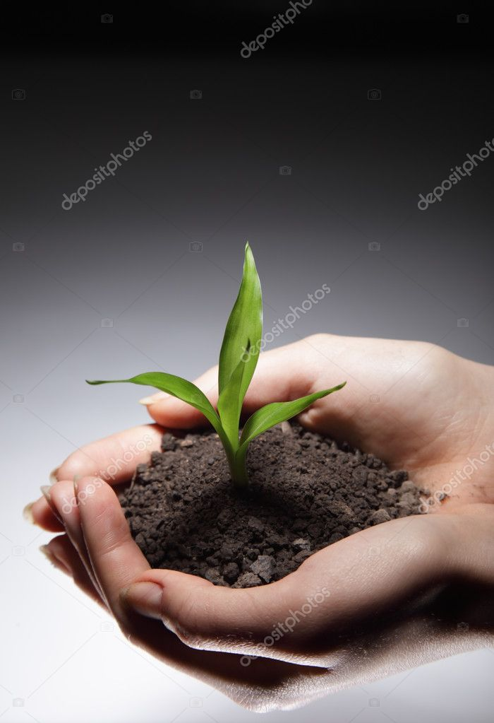 Sprout in woman hand  Stock Photo #5646368