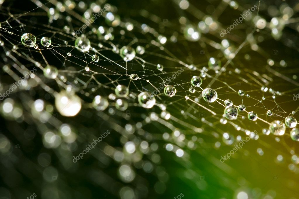 Spider web with water drops on green background  Stock Photo #5646815