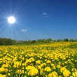 Sonnige Blumenwiese - Stock Photo