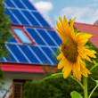 Solar cells and sun flower - Stock Photo