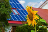 Solar cells and sun flower — Stock Photo