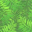 Jungle background — Stock Photo #5521337