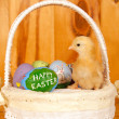 Tiny Easter chick in the middle of hand panted Easter eggs — Stock Photo