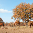 Stock Photo: Serene scene of three horses grazing