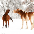 Stock Photo: Old horse and young horse playing in snow