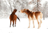 An old horse and a young horse playing in snow — Stock Photo