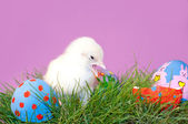 Yellow Easter Chick with its beak open — Stock Photo