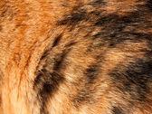 Pomarańczowe i czarne włosy — Zdjęcie stockowe