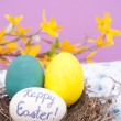 Hand painted Easter eggs in a bird nest — Stock Photo