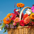 Stock Photo: Beautiful, bright fall flowers in wicker basket